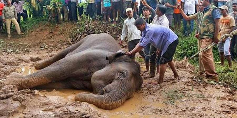 Hassan: Elephant loses battle with death
