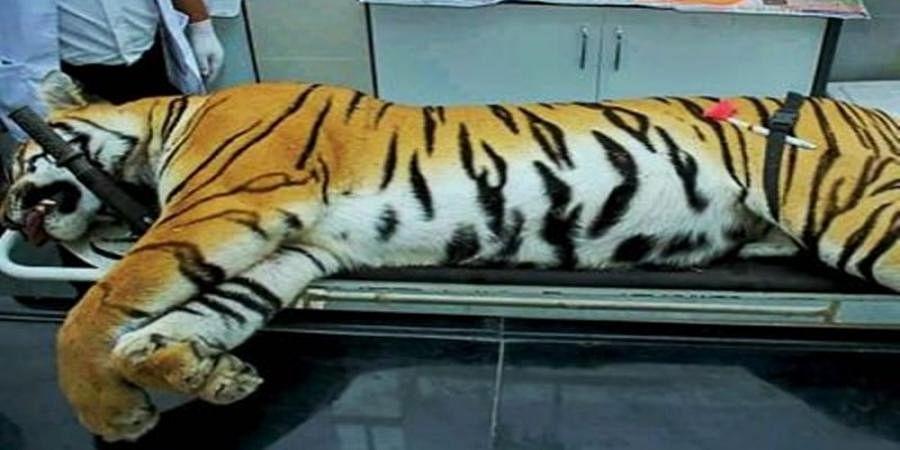 Have to consider women who were killed by tigress: Maha Min to Maneka