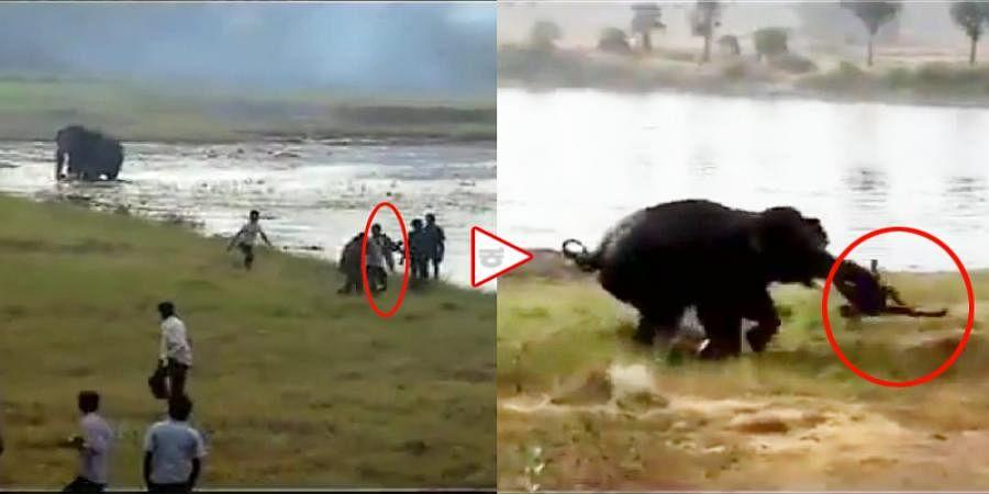 Watch video, forest officer killed by elephants near Karnataka-TamilNadu border Shoolagiri