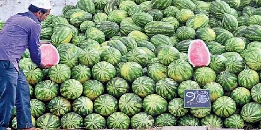 Water melon buisness