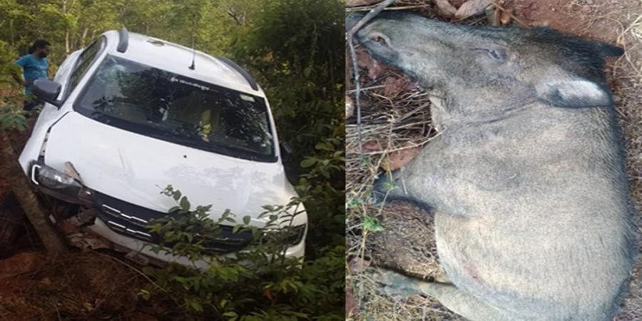 A man died after wild pig hit the car at Baindur