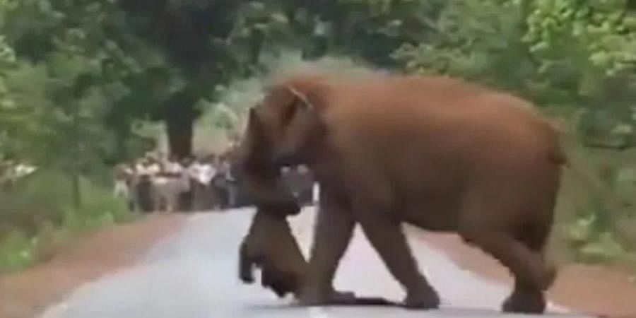 Elephant Herd Takes Out