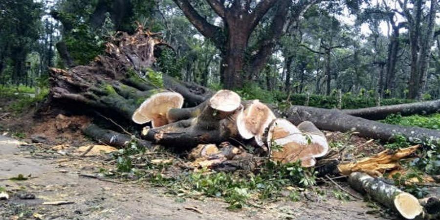 Kodagu DCF Manjunth suspended for dereliction of duty