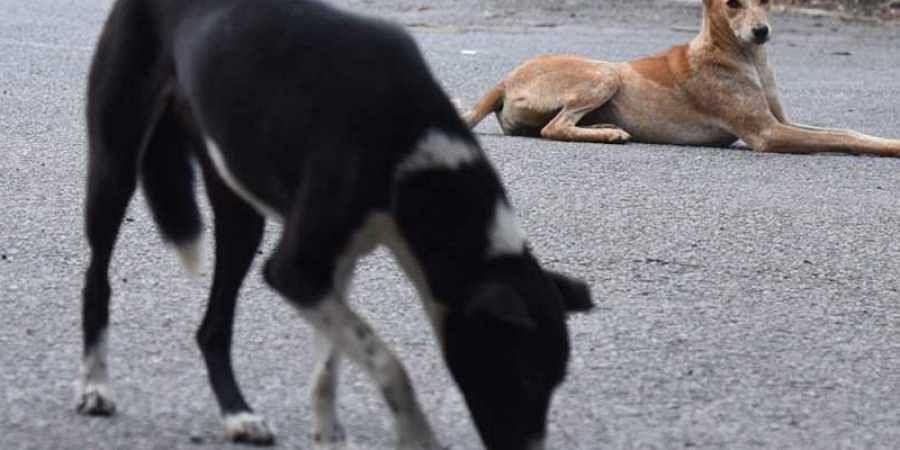 5-year-old mauled to death by dogs in Bengaluru
