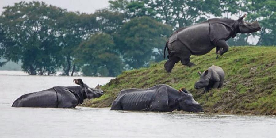 Over 50 animals die in Kaziranga due to floods
