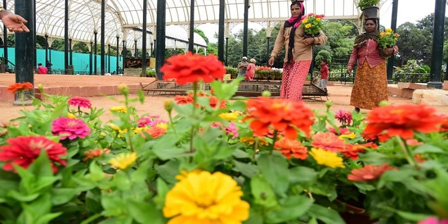 About 13 lakh flowers will be used to create the royal theme including the Jayachamarajendra Circle of Mysuru