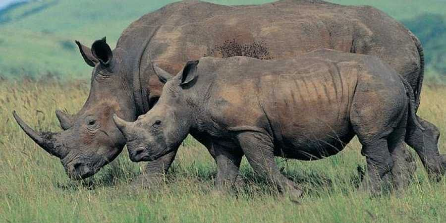 Increase in rhinoceros population in two national parks in West Bengal