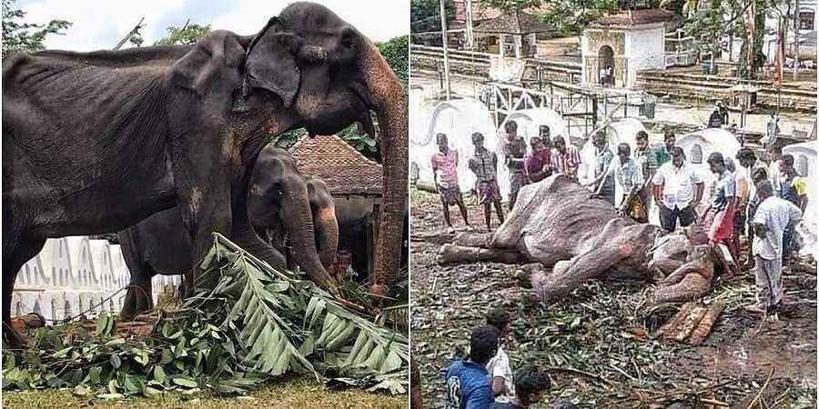 Elephant Tikiri