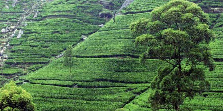 Tea production will increase only when workers' quality of life betters: ITA