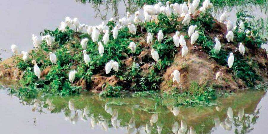 Feathered friends flock to Bellandur Lake