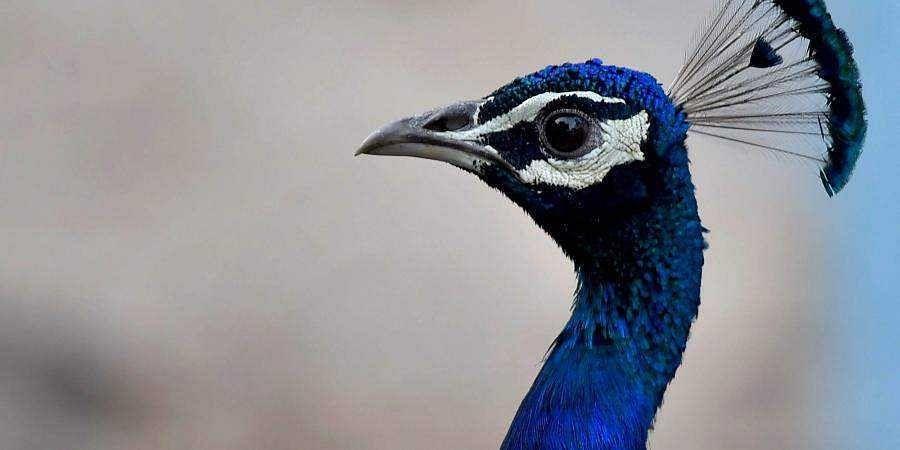 Plan to start safari in Nugu Wildlife Sanctuary on October 30 put on hold