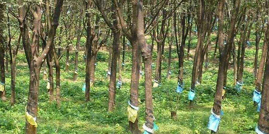 Karnataka's Land Reforms open Dakshina Kannada doors to Kerala land buyers