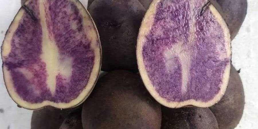 blue herbal potato