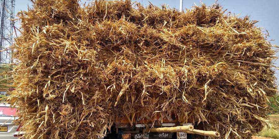 Bagalkot: Huge demand for Maize grass