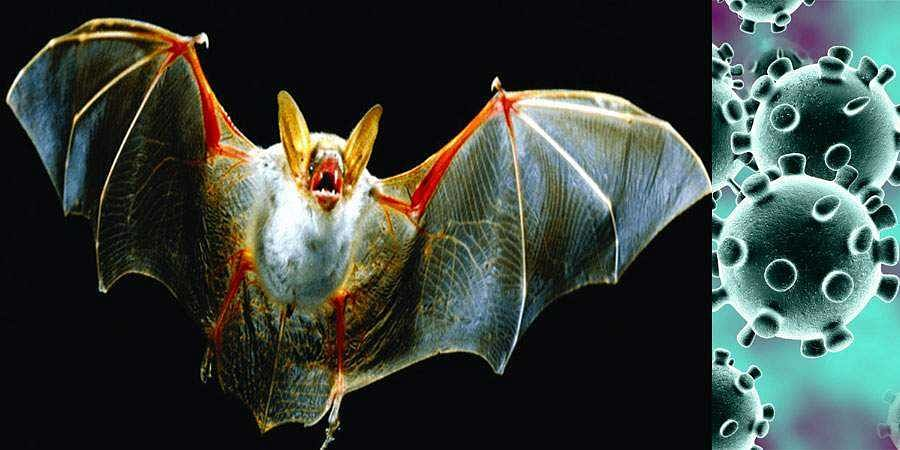 Bat-ting for a COVID-19 cure