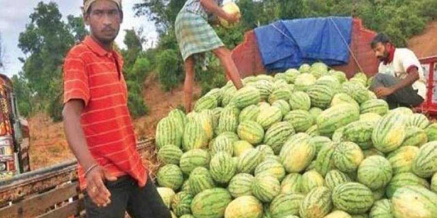 Farmers_transport_watermelons_from_Kalaburagi_in_Karnataka1