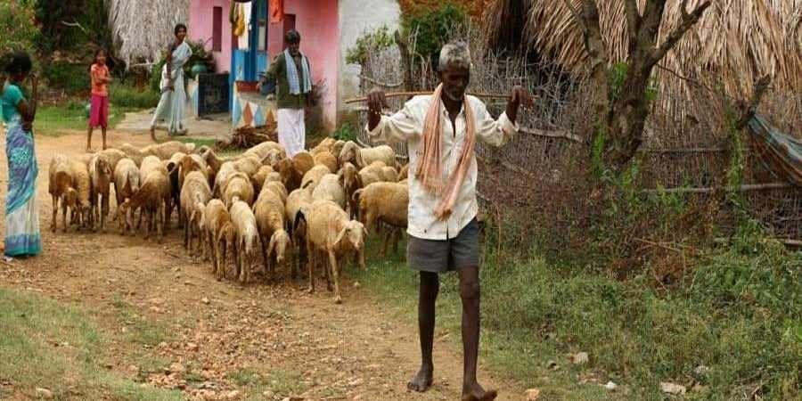 Shepherd tests positive for COVID-19 in Karnataka,