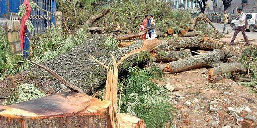 ORR project will fell 8,500 trees: Eco-impact study