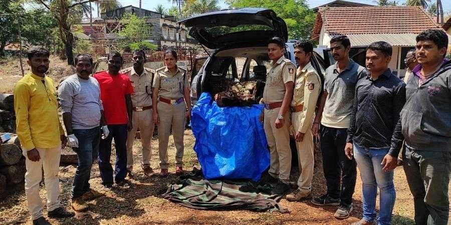 After filmy chase of suspicious vehicle, Karnataka forest staff seize slaughtered gaur